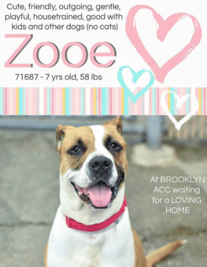 Being Alone, Bones, and Cats: Cute, friendly, outgoing, gentle,  playful, housetrained, good with  kids and other dogs (no cats)  ZOoe  71687-7 yrs old, 58 lbs  At BROOKLYN  ACC waiting  for a LOVING  HOME INTAKE DATE: 08-10-2019  Meet zesty Zooe @ BACC! Friendly, outgoing and gently playful with adults and older kids - Zooe enjoys playing fetch and understands cues such as sit, down, and come. Please share this girl for a home!   ZOOE, ID# 71687, 7 yrs old, 58.2 lbs, Brooklyn Animal Care Center, Large Mixed Breed Cross, Brown / White Female,  Owner Surrender Reason: Shelter Assessment Rating: LEVEL 2 No young children (under 5) Medical Behavior Rating:   OWNER SURRENDER NOTES - BASIC INFORMATION: Zooe is a 7 year old female large mixed breed that has been with the owner for the same amount of time. There are no known injuries or health issues. The last time she saw the vet was in 2016. Zooe previously lived with 1 adult and 1 child. Around strangers, Zooe is friendly and outgoing. She is gentle when playing with adults. Around newborns and children to the age of 8, Zooe is relaxed, playful, and respectful. She is gentle when playing with children. Zooe has lived with another female dog and she has been relaxed, playful,, and gentle with them. Zooe is aggressive with other cats. She will begin to bark: Zooe has no ressource guarding issues. She is friendly when her food is touched while she is eating, or if her toy or treat are taken away. Zooe has no bite history and is housetrained. Heer previous owner describes her energy level as high.   Other Notes: Zooe is often anxious when left alone and barks a lot. When there are storms or fireworks, she is terrified, panics, and will try to escape. If someone unfamiliar approaches the house or a family member, she usually isn't bothered but will bark. However, she is friendly when she is pushed/pulled off the furniture, held or restrained, disturbed while sleeping, given a bath, and has her nails trimmed.  Has this dog ev
