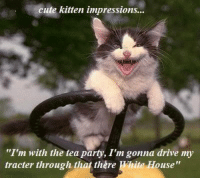 """cute kitten impressions... The Tea Party: cute kitten impressions...  """"I'm with the tea party, I'm gonna drive my  tracter through that there Mite House"""" cute kitten impressions... The Tea Party"""