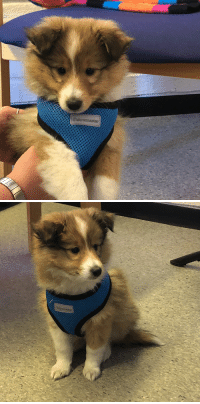 Cute, Work, and Puppy: Cute little puppy visiting my mom at work!