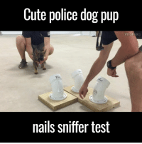 Dank, Pup, and 🤖: Cute police dog pup  Viral  nails sniffer test The little guy is a natural! 😂🐶🙌  via ViralHog