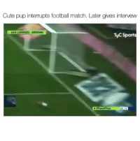 Arsenal, Cute, and Football: Cute pup interrupts football match. Later gives intervew  SAN LORENZO ARSENAL  TyC Sports  05 17 Lmao 😂