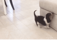 Cute, Couch, and Puppy: Cute puppy ascends large cliff.