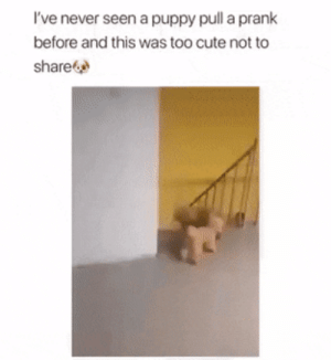 Cute Puppy pulls prank on his owner. SO CUTE xD: Cute Puppy pulls prank on his owner. SO CUTE xD