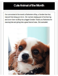 Mom said I'm in the news again.. well in the newsletter for where mom goes and shoots! Yes, i am the cute animal of the month for july...mom says I'm the cute animal of EVERY month! -woof!: CuteAnimal of the Month  our cute animal of the month is RatherinesiHop.2Canzier that they  rescued from being put down. He was bom missing part of his front eg  and is none know asikop the 3-legged Cavaser! Thank you Katherine for  rescuing him and giving him agreat forever home. He is Mom said I'm in the news again.. well in the newsletter for where mom goes and shoots! Yes, i am the cute animal of the month for july...mom says I'm the cute animal of EVERY month! -woof!