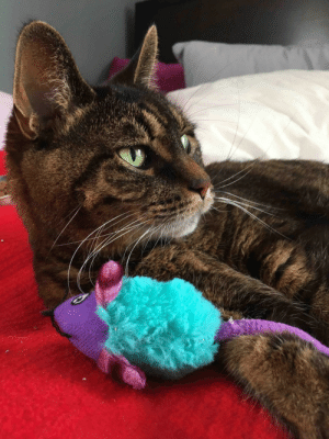 Cats, Cute, and Tumblr: cutecatoverlord:  A few days ago my sweet girl lost her fight against kidney disease and bone cancer. The sadness is overwhelming…More Cute Cats