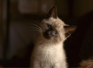 cutecatoverlord:  Sofie is never too sure of what face to make for the camera.More Cute Cats : cutecatoverlord:  Sofie is never too sure of what face to make for the camera.More Cute Cats