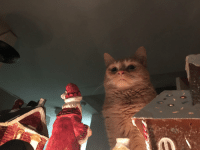 cutefunnybabyanimals:I took a picture of my cat and captured her demise over the nativity town in my house. via /r/aww http://ift.tt/2z9Ch6g: cutefunnybabyanimals:I took a picture of my cat and captured her demise over the nativity town in my house. via /r/aww http://ift.tt/2z9Ch6g