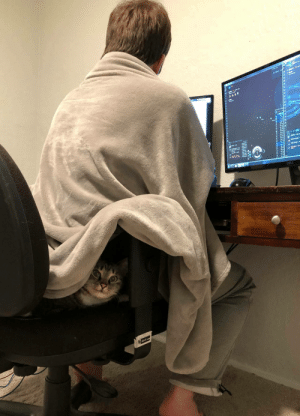 cutekittensarefun: I was looking for my cat for a while and then a little face popped out to judge me: cutekittensarefun: I was looking for my cat for a while and then a little face popped out to judge me
