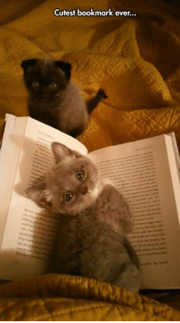 Cute, They, and Hurts: Cutest bookmark ever... <p>They Are So Cute, It Hurts.</p>