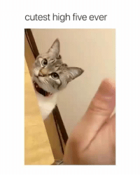 Definitely, Memes, and 🤖: cutest high five ever Definitely one of the cutest | @cuteandfuzzybunch 👈