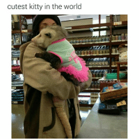 Memes, 🤖, and Bull: cutest kitty in the world  Some bul  is She's so cute 😍 (Follow @some_bull_ish for more)