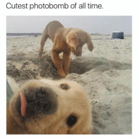 Funny, Memes, and Photobomb: Cutest photobomb of all time. @hilarious.ted is my favorite animal memes page