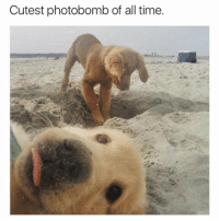 Picture of the day (@hilarious.ted): Cutest photobomb of all time. Picture of the day (@hilarious.ted)