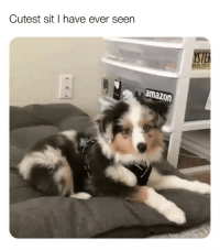 Amazon, Low Key, and Memes: Cutest sit l have ever seen  STE  NTA CRz  amazon When u had a big lunch with ya homies and u low key shleep at ya desk and the bossman walk by 😩😂😂😂 (📹: @sarina.azimixx)