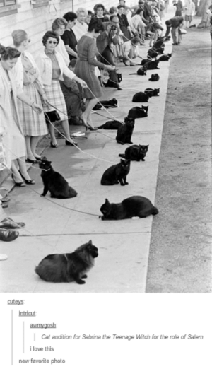 Love, Sabrina, the Teenage Witch, and Salem: cuteys  intricut  awmygosh  Cat audition for Sabrina the Teenage Witch for the role of Salem  i love this  new favorite photo