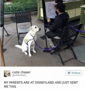 https://t.co/EtKq9BS2TB: cutie chaser  Follow  @cutiechaser  MY PARENTS ARE AT DISNEYLAND AND JUST SENT  ME THIS https://t.co/EtKq9BS2TB