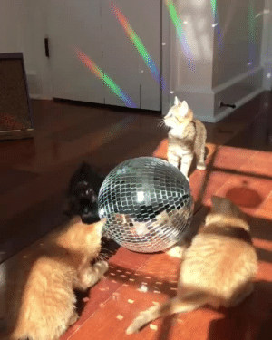 cybergata: Life is a Disco Ball!: cybergata: Life is a Disco Ball!