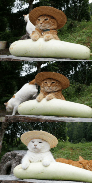 Tumblr, Blog, and Http: cybergata:  Toro with a bottle gourd. Shironeko wants to pose with it too.   ゆうがお