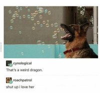 Love, Memes, and Shut Up: cynological  That's a weird dragon.  roachpatrol  shut up i love her Dragon Boy Is Good Boy