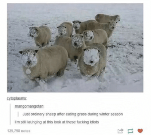 Memes: cytoplasms  mangomangotan  Just ordinary sheep after eating grass during winter season  im still lauhging at this look at these fucking idiots  129,798 notes Memes