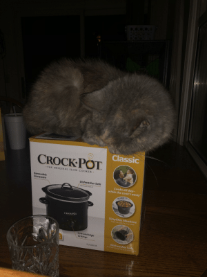 All hail Queen Cat of the Crockpot.: D.0.0.0.0  Classic  CROCK POT  • THE ORIGINAL SLO W COOKER  Removable  Stoneware  Dishwasher Safe  Cooks all day-  while the cook's away  Stoneware and Lid  Simplifies Mealtime  Pretty enough for your table  CROCK POT  THE DIGINAL SLON CoorfR  LOW  High  ff  Low and High  Settings  E  ST  Dishwasher Safe  Durable enough for your dishwosher  SCR200-B All hail Queen Cat of the Crockpot.
