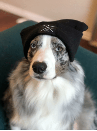 """Omg, Tumblr, and Blog: D&B  SUPPLY <p><a href=""""https://omg-images.tumblr.com/post/167663619982/lux-wearing-her-beanie"""" class=""""tumblr_blog"""">omg-images</a>:</p>  <blockquote><p>Lux wearing her beanie.</p></blockquote>"""