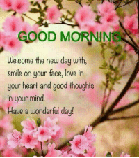 Love, Memes, and Good: D MORNINS  Welcome the new day with  smile on your face, love in  your heart and good thoughts  in your mind.  Have a wonderful day!
