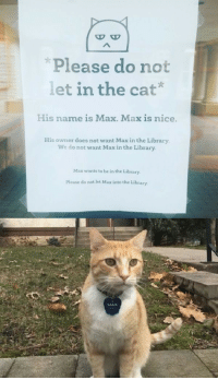 Library, Sad, and Nice: D O  Please do not  let in the cat'  |  His name is Max. Max is nice.  His owner does not want Max in the Library  We do not want Max in the Library  Max wants to be in the Library  Please do not let Max into the Library  MAX Sad Max
