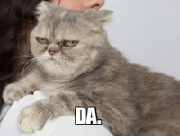 LOLcats, Approved, and Approve: DA Sovakitty approves