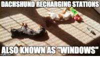 "Memes, 🤖, and Window: DACHSHUNDRECHARGINGSTATIONS  ALSO KNOWN AS WINDOWS"" Recharging For More Mischief!"