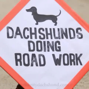 Omg, Target, and Tumblr: DACHSHUNDS  DOING  ROAD WORK  itydachshund.cop overheal:  chasing-cin:  They are doing such a good job.  omg…thank you for your service….