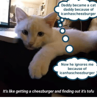cat daddy: Daddy became a cat  daddy because of  icanhascheezburger  Now he ignores me  because of  icanhascheezburger  It's like getting a cheezburger and finding out it's tofu