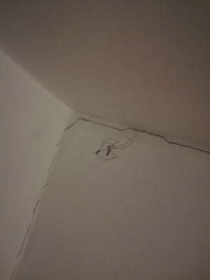 Take Care, Daddy Long Legs, and Intruders: Daddy long legs helping take care of pesky intruders