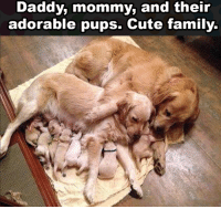 Cute, Family, and Omg: Daddy, mommy, and their  adorable pups. Cute family. OMG! So sweet & cute families members!
