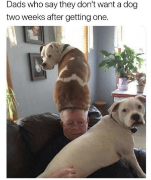 Dank, Memes, and Target: Dads who say they don't want a dog  two weeks after getting one. After Two Weeks.. by bobsburger900 MORE MEMES