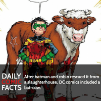 Who is your favorite favorite DC hero? • Follow my other account @wallcrawlerfacts: DAILY After batman and robin rescued it from  a slaughterhouse, DC comics included a  FACTS bat-cow Who is your favorite favorite DC hero? • Follow my other account @wallcrawlerfacts