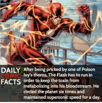 Memes, The Flash, and Villain: DAILY After being pricked by one of Poison  Ivy's thorns, The Flash has to run in  FACTS order to keep the toxin from  metabolizing into his bloodstream. He  circled the planet six times and  maintained supersonic speed for a day. Favorite Speedster? (Typo: had* not has) • dccomics detectivecomics comics dccomicheroes dccomicvillains hero villain heroes villains justiceleague unitethe7 dccomicstudios dccu dccomicfacts dailycomics comic comicfacts dailycomicfacts