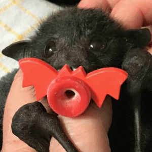 Tumblr, Blog, and Http: daily-batty-dose:  Your Daily Batty Dose(Reblogged from @amlforsaken)