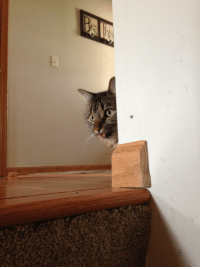 Tumblr, Blog, and Super: daily-blep:  Super sneaky blep