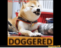 Daily dose of d ggo  DOGGERED  ifunny.CO all those watermarks add to the charm