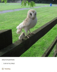 Animals, Anime, and Baby, It's Cold Outside: daily-funny animals:  Look at my baby!  Trending