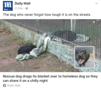 Dogs, Homeless, and Streets: Daily Mail  11 hrs  MailOnline  The dog who never forgot how tough it is on the streets  Rescue dog drags its blanket over to homeless dog so they  can share it on a chilly night  Daily Mail <p>Dogs and sharing</p>