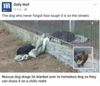 Dogs, Homeless, and Streets: Daily Mail  11 hrs  The dog who never forgot how tough it is on the streets  Rescue dog drags its blanket over to homeless dog so they  can share it on a chillv niaht Tbh we don't deserve dogs via /r/wholesomememes http://bit.ly/2SfbzXc