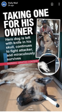 laughoutloud-club:  I rather see people die than see dogs get hurt!: Daily Mail  mail) 2h ago  9  TAKING ONE  FOR HIS  OWNER  Hero dog is left  with knife in his  skull, continues  to fight attacker,  and miraculously  survives  WARNING: GRAPHIC CONTENT  READ laughoutloud-club:  I rather see people die than see dogs get hurt!