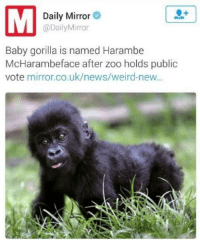 Harambe: Daily Mirror  @Daily Mirror  Baby gorilla is named Harambe  McHarambe face after zoo holds public  vote mirror.co.uk/news/weird-new...
