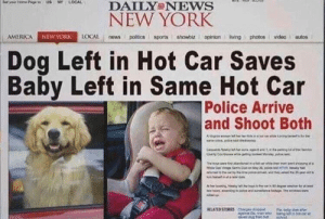 I feel like this has a little something for everyone: DAILY NEws  NEW YORK  AMERICA  AGAİ  LOCAL news poitics sports showbiz. I opinionivingphotosvideo autos  NEW YORK  Dog Left in Hot Car Saves  Baby Left in Same Hot Car  Police Arrive  and Shoot Both I feel like this has a little something for everyone