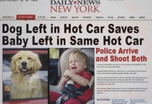 America, New York, and News: DAILY NEWS  NEW YORK  AMERICA NEWyORK 1OCAL news politics sports showbiz opinion living photos video autos  Dog Left in Hot Car Saves  Baby Left in Same Hot Car  Police Arrive  and Shoot Both  RELATED STORES Our Hero!