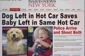 America, Love, and New York: DAILY NEWS  NEW YORK  AMERICA NEWYORK LOAL news politicssports showbir opinion living photosvideo autos  Dog Left in Hot Car Saves  Baby Left in Same Hot Car  Police Arrive  and Shoot Both  RELATED STORES I love happy endings