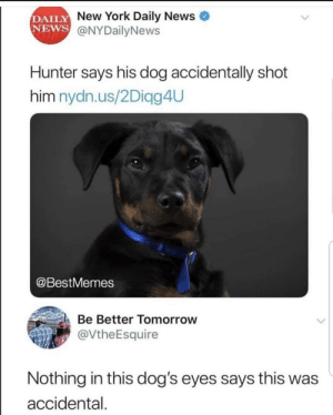 Dogs, Memes, and New York: DAILY  NEWS  New York Daily News  @NYDailyNews  Hunter says his dog accidentally shot  him nydn.us/2Diagg4UU  @BestMemes  Be Better Tomorrow  @VtheEsquire  Nothing in this dog's eyes says this was  accidental. 30-minute-memes: Baaaad hunter!