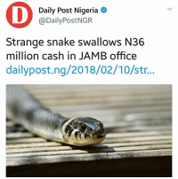 Memes, Nigeria, and Office: Daily Post Nigeria  @DailyPostNGR  Strange snake swallows N36  million cash in JAMB office  dailypost.ng/2018/02/10/str.. I am not understanding 😦😦😒😂 KraksTV
